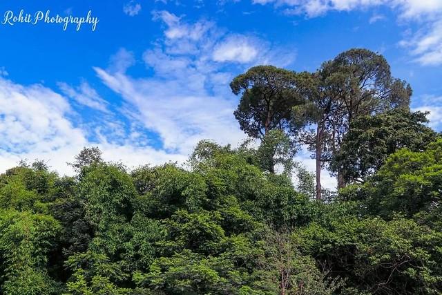 Jungle.