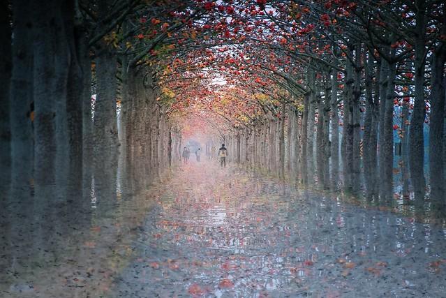 雨中木棉花