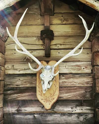 Skull #mountain #hut #wood #skull #animal #igers #igersitalia #travelgram #picoftheday #photooftheday #gressoney #valdaosta #death #old | by Mario De Carli