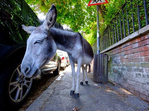 Donkey | by The-E