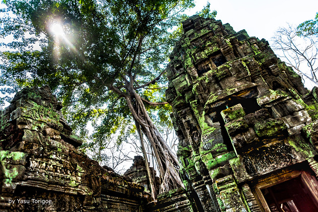 Sun Lighting up the Lickens Covering Rocks of the Ta Prohm Temple, Cambodia-29a