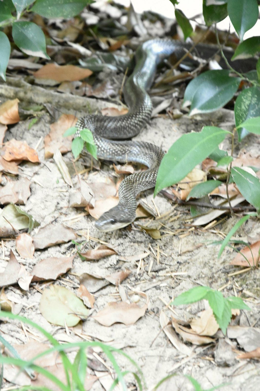 Jardins de Kôraku-en - mais qui sont ces serpents...