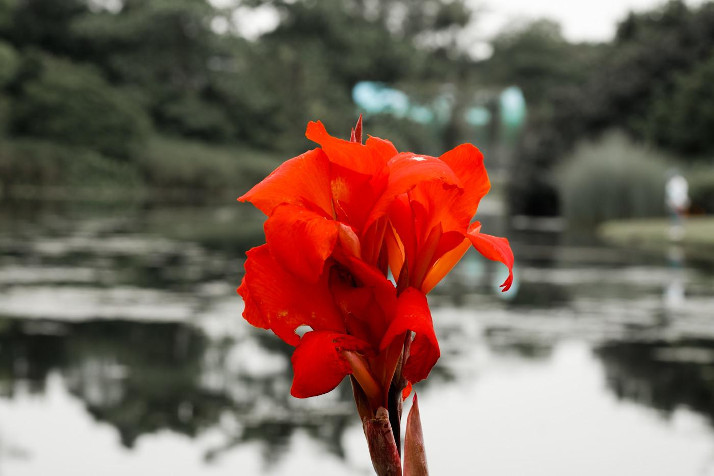 xf60mm f2.4 r macroの作例 レビュー マクロ シンガポール 植物