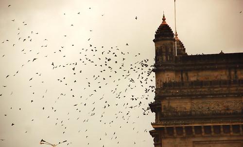 gatewayofindia debmalyamukherjee canon550d 18135 pigeons silhouette birds architecture