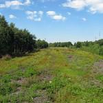 Wo sich einst Gleise erstreckt haben, erobert die Natur im Gleispark Frintrop alles zurück
