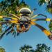 2018-05-23 Mozambique BugShot Day 4 - Air Strip