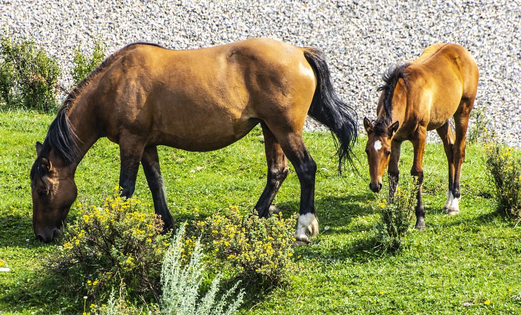Wild Horse Provincial Park