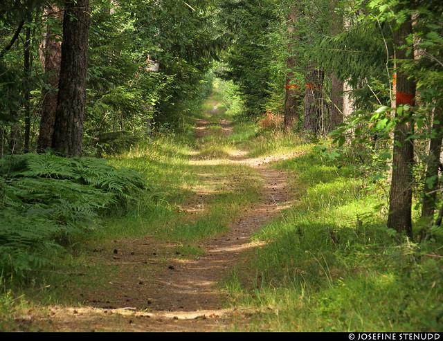 20180801_04 The trail Bohusleden, section 14 - Bovik to Metsjö   Bohuslän, Sweden