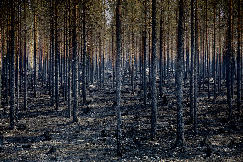 Image result for europe fires
