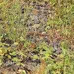 In den Bereichen, die mit Schotter bedeckt sind, gedeihen einige robuste Pflanzen