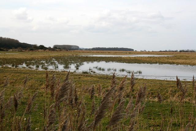 Marshes at Holkham