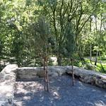 Bäume in der Ruine im östlichen Teil des Gleisparks Frintrop