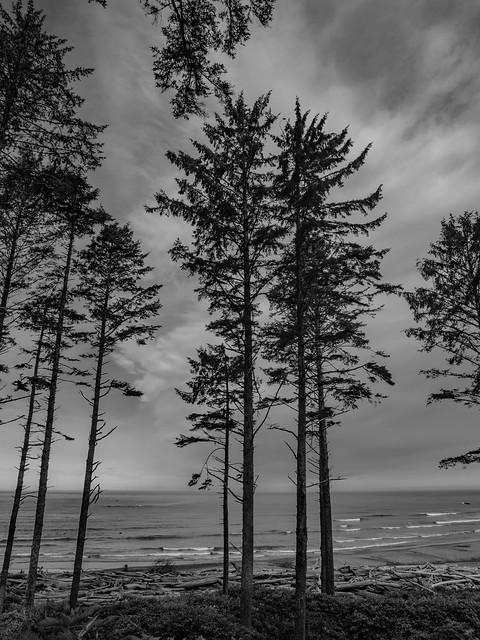 Ruby Beach Trail-4