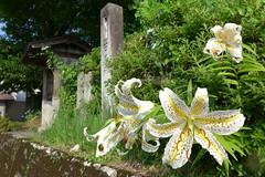 駅付近の名入集落(夏)