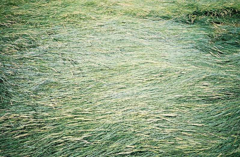 Sea of grass, Pill Foreshore