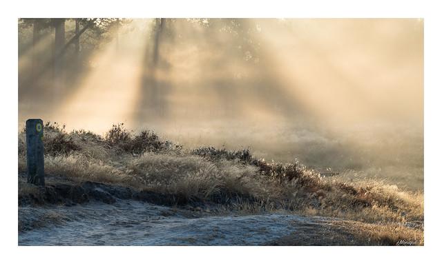 An early, foggy morning at Kortenhoeff.
