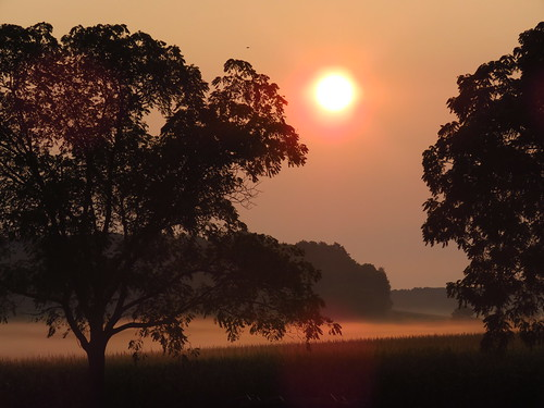 morning muskego wisconsin nature sun sunrise trees sky farm fog