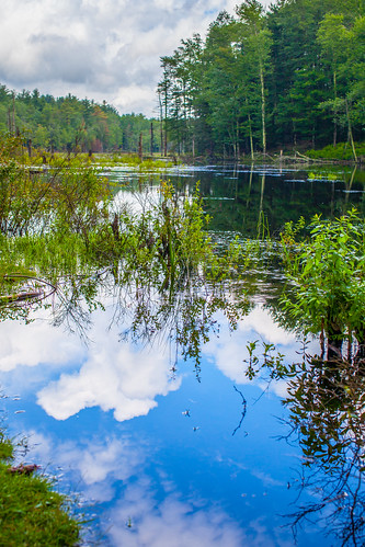 water reflections clouds sky trees landscape sullivancounty canon5dmkii tamron45mm