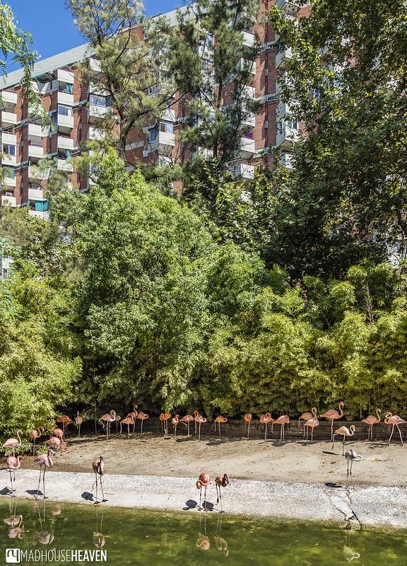 Barcelona Zoo - 0159