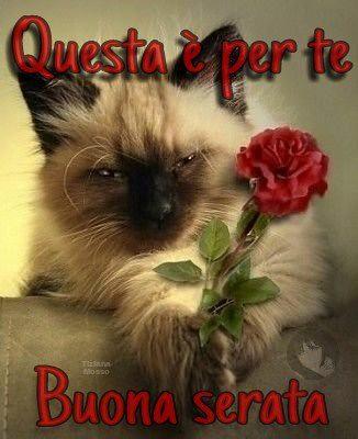 Buona Serata Buonasera Link Gatto Rosa Httpswwwf Flickr