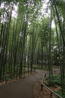 Bamboo forest, Kyoto | by Tartanna