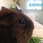 barbara 3 (3)