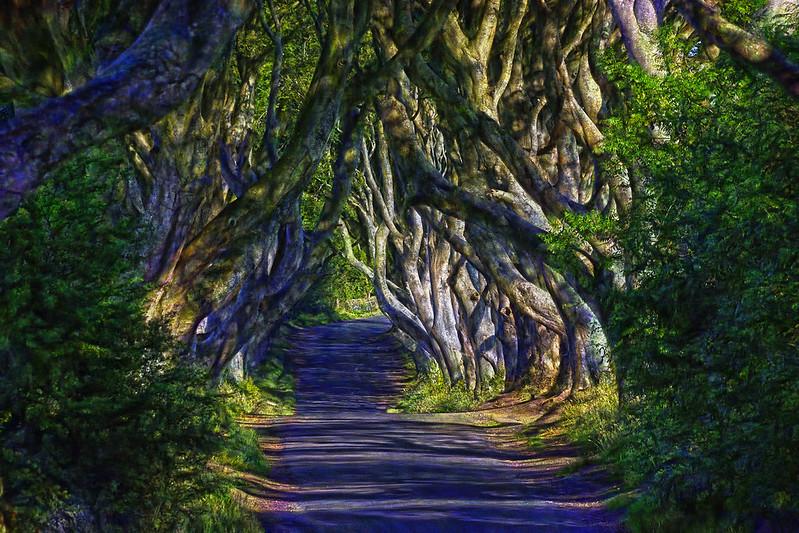 The Dark Hedges - Irlanda