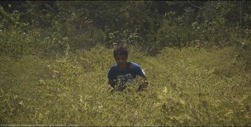 reel cinematografia documental cinematographer colombia david horacio montoya davidhoracio.com 23