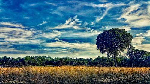 newengland rhodeisland rhody warwick landscape photography summertime summer clouds nature tree grass travel travelnewengland traveling travelphotography