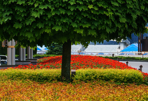 sonyalpha sonya6000 sony a6000 ilce6000 mirrorless flowers geraniums tree leaves water johnrystad
