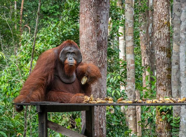 Borneo-46