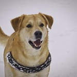 2010-03-07_13-20-51 - Winter Dog