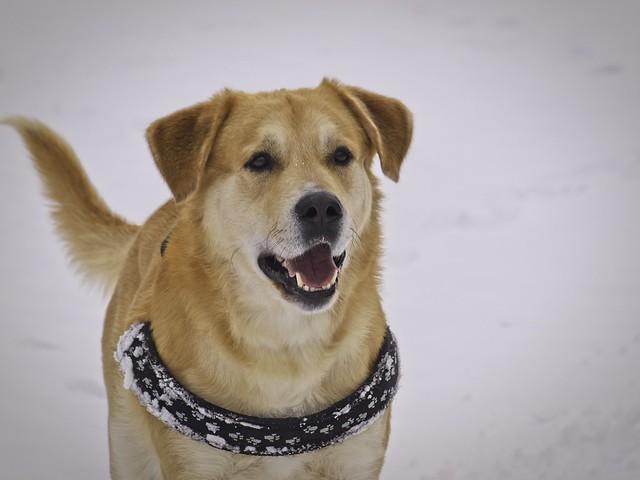2010-03-07_13-20-51 - Winter Dog