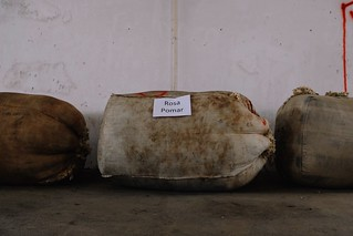 sorting and grading fleece | by Rosa Pomar
