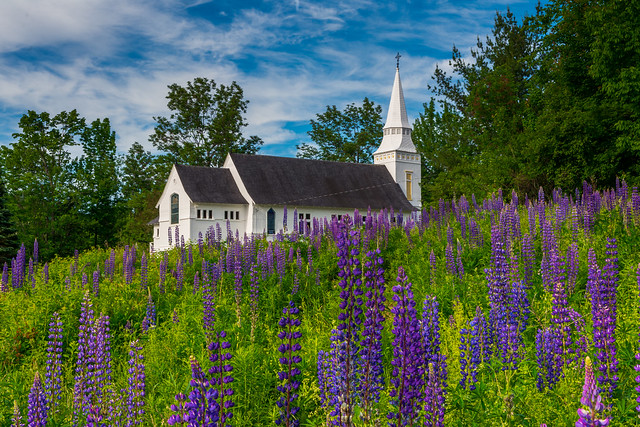 St. Matthews Chapel and Lupines