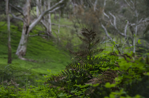 outside blur dof nature tree trees green art light landscape naturephotography australia artwork