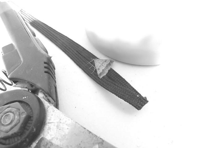 moth on strap 6 19 18