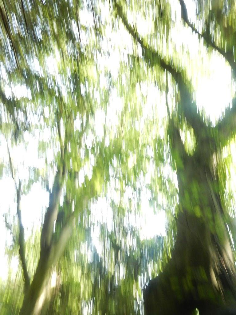 trees Shoreham figure of 8