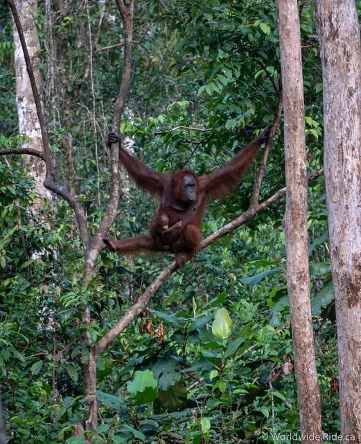 Borneo-15