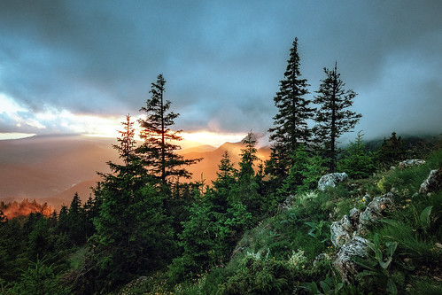 mountains forest lights clouds after rain flowers vegetation golden hour carphatian pine valley