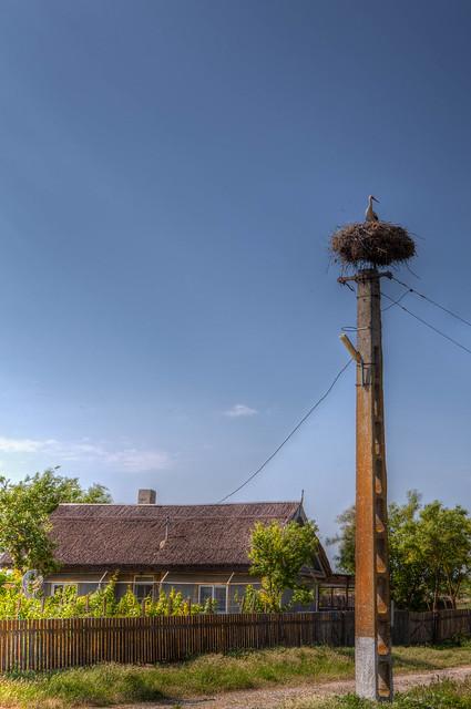 Cigogne et maison traditionnelle,