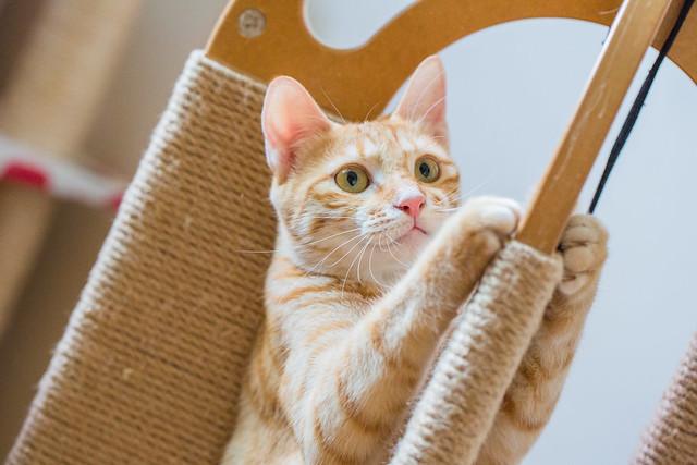 Playing Kitten 閒随稚子作兒嬉