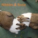 DSC01528 nibbles&rosie