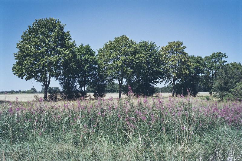 [analog] Baumreihe