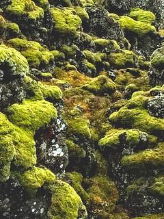 Moss -Pingvellir Iceland