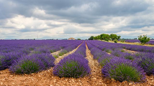 l'âme de la Haute-Provence (J.Giono)