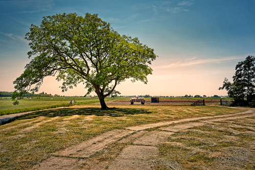 tree nature outdoors grass sky ruralscene landscape summer scenics sunset meadow sunlight greencolor field season blue sun cloudsky land beautyinnature nets wagon
