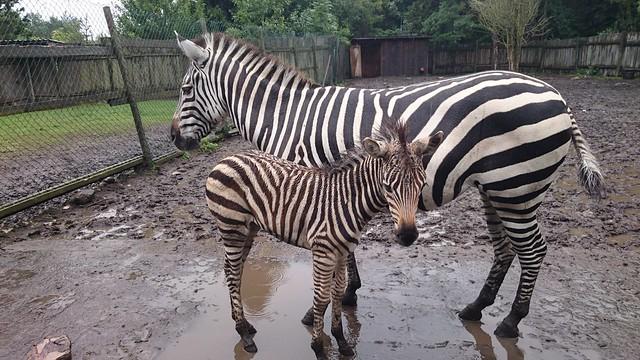 Zoo, Muhu, Estonia