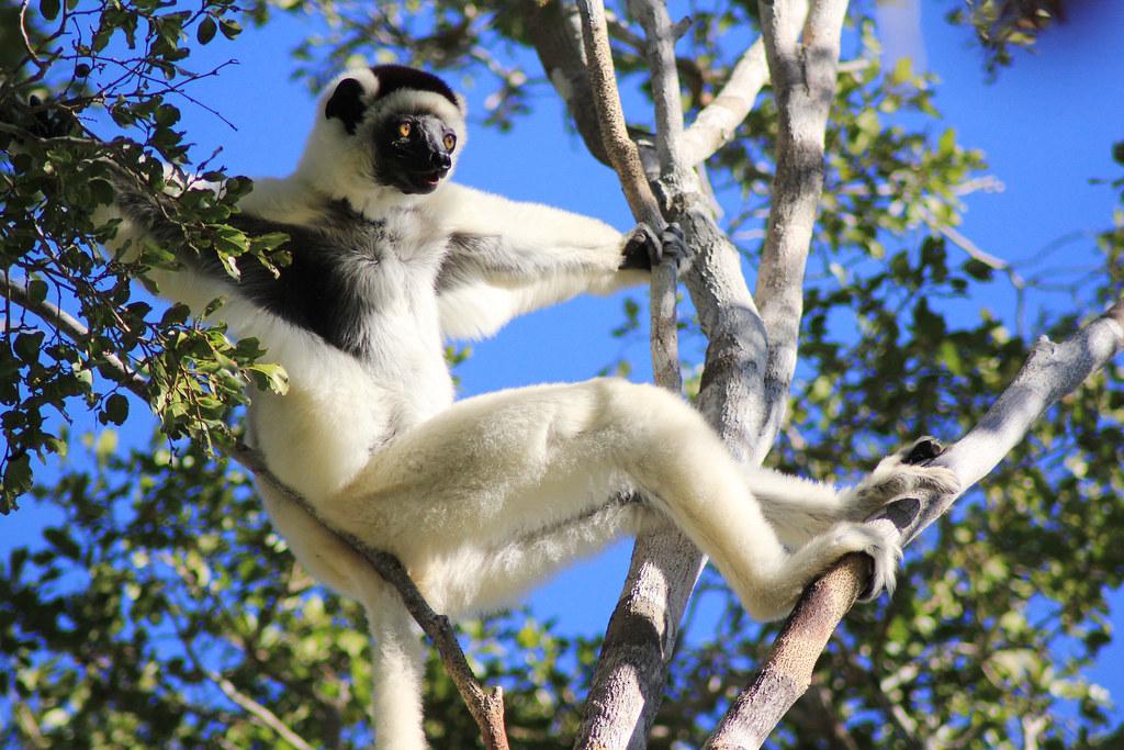 Madagascar - 2018