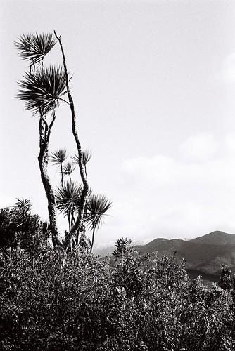 blackandwhite newzealand landscape analog mountbruce kodaktrix 35mmfilm 景观 树 照片